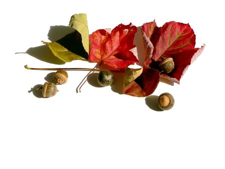 colorful fall leaves on a white background photo