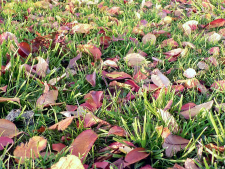 photo of fallen leaves on a green lawn in Autumn Stock Photo - 2145793