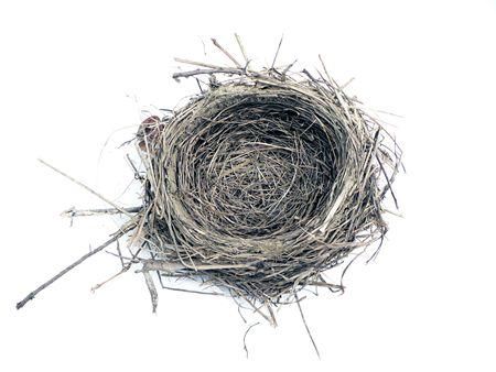 白い背景で隔離された鳥の巣の写真