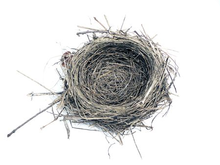 photo of a bird nest isolated over white background