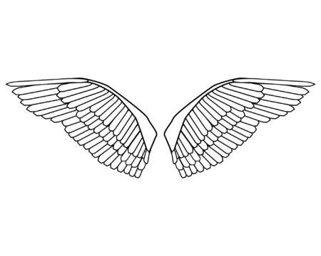 a editable vector illustration of bird wings Çizim