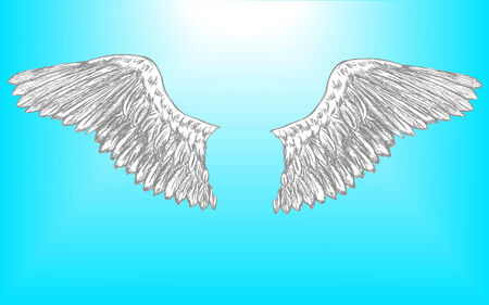 raptors: vector illustration of a pair of eagle wings that is setup for editing Illustration