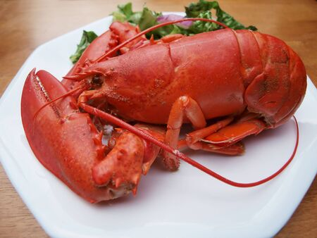 photo of a Maine lobster thats been steamed cooked till red on a white plate with salad on the side Stok Fotoğraf