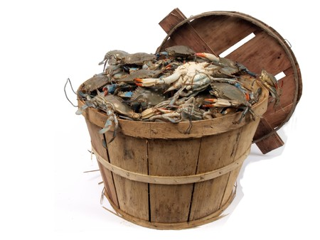 isolated  on a white background photo of a bushel basket of live blue crabs from the Chesapeake Bay of Maryland  Stock Photo