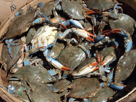メリーランドのチェサピーク湾からのライブの青カニのブッシェル バスケットの写真をクローズ アップ