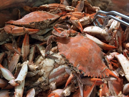 close up of cooked blue crabs from the Chesapeake Bay of Maryland in a pot outdoors Stok Fotoğraf