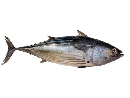 vis: een tonijn geïsoleerd op een witte achtergrond  Stockfoto