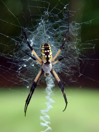 close up view of a large spider positioned on its web