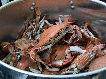 cooked blue crabs from the Chesapeake Bay of Maryland cooking in a pot outdoors photo