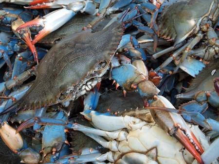 メリーランドのチェサピーク湾からのライブの青カニのブッシェルの写真をクローズ アップ