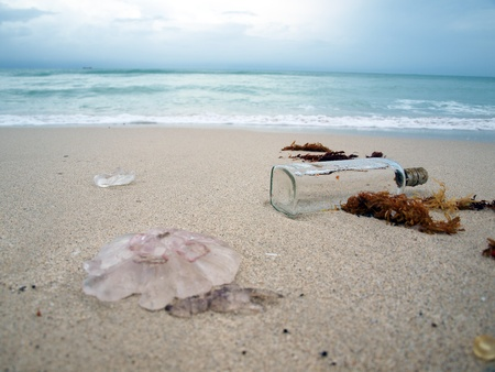 botella de licor: una botella de licor vac�a y medusas en la l�nea de surf en una playa de South Beach de Miami, Florida.