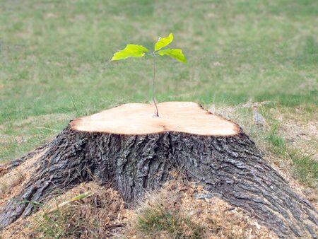 tree stump: a tree Stock Photo
