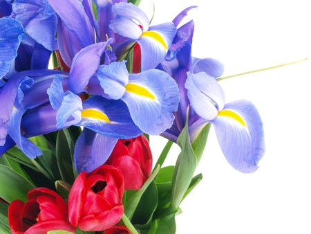 a bouquet of purple colored irises and red colored tulips in a clear glass vase isolated on a white background photo