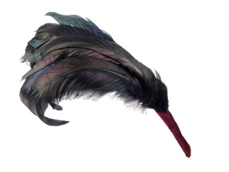 vintage black colored hat feathers adornment isolated on white background Stok Fotoğraf