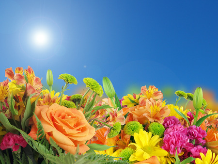 a background image of flowers consisting of irises, roses, petunias, and daiseys under a sunny bluesky.