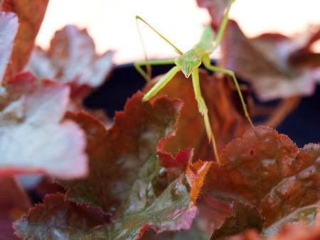 praying mantis balancing on a leaf