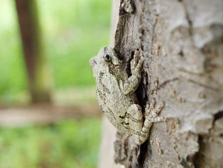 photo of a Treefrog clinging on a tree