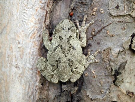treefrog: photo of a Treefrog clinging on a tree