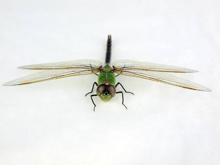 photo of a dragonfly isolated on a white background