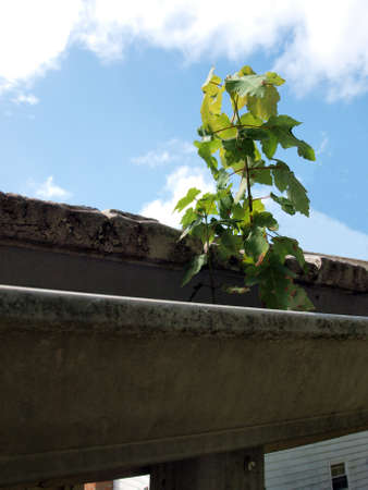 tree sapling growing in a home gutter Stock fotó - 155248195