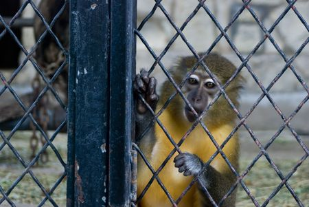 a monkey in a zoo cage looking lonely Stock Photo