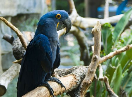 a blue parrot perched on a tree branch in a zoo photo