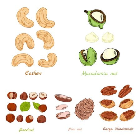 Set of nuts color hand-draw illustration from different sizes Stock Photo