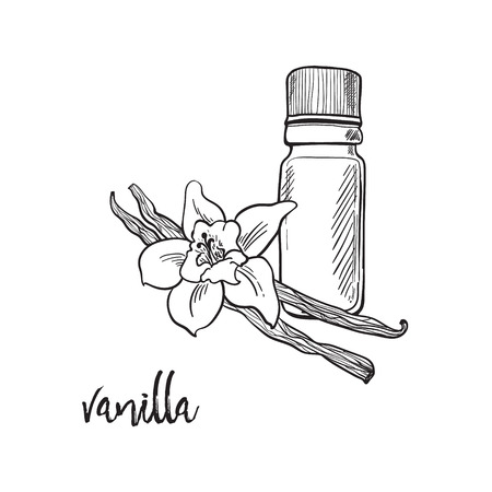 Vanilla flower and bootle spicy outline grafic illustration