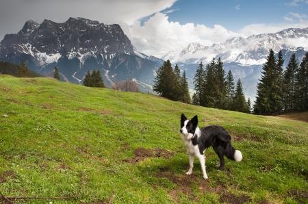 dolomites: Dog on the mountain pass, Dolomites mountains Stock Photo