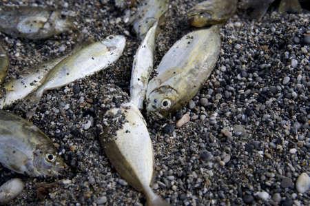 few: close up of few dead fishes on sea coast