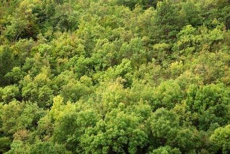 mountainous: mountainous forest of Crimea. may be use like background