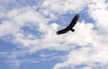 everglades: hovering bird in the sky