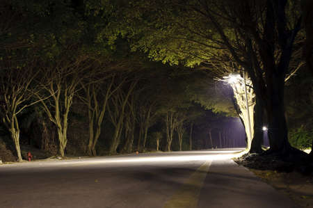 asphalt road in dark forest