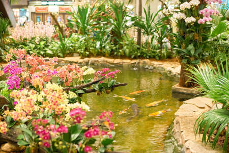SINGAPORE - CIRCA SEPTEMBER, 2016: Koi pond at Singapore Changi Airport. Changi Airport is one of the largest transportation hubs in Southeast Asia. Editorial