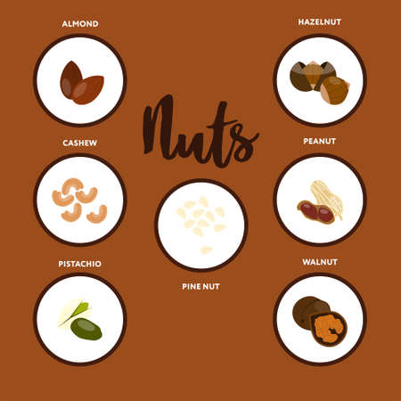 Types of nuts Vector illustration in flat style