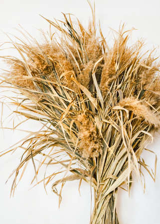 Natural decoration Photo for posters and banners Bouquet of dried field flowers on white background Archivio Fotografico