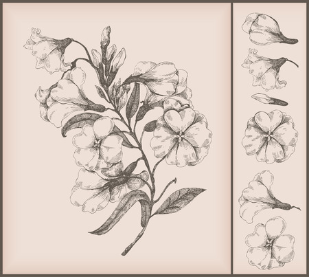 vintage flower drawing