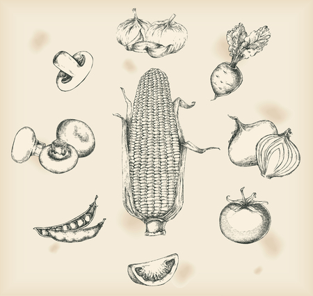 peas: Vegetables drawings- isolated objects