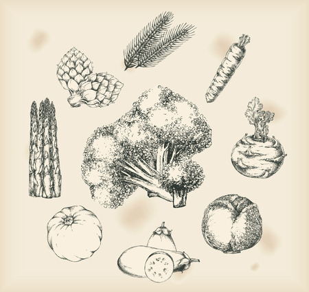 asparagus: Vegetables drawings- isolated objects