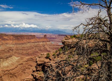 canyonlands: Canyonlands Utah