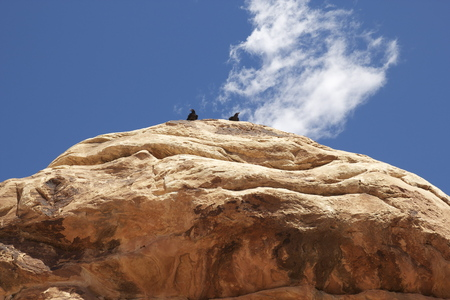 canyonlands national park: Two Ravens in Canyonlands National Park