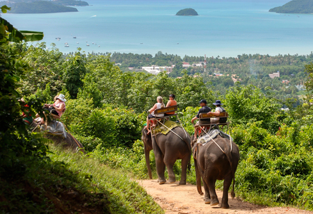 Elephant rides in Phuket, Thailand. Editorial