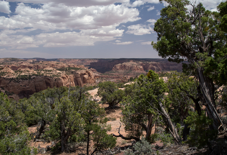 anasazi ruins: Navajo National Monument, Arizona