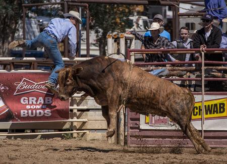 daring: Bull Riding, Cottonwood Rodeo, California.