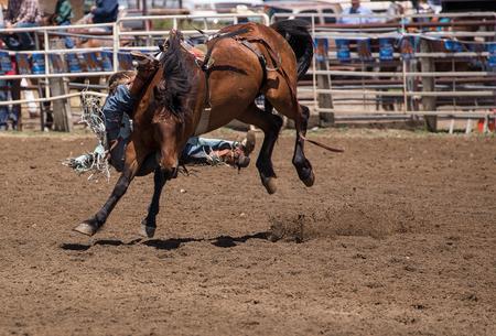 pima: Saddle Bronc Rider, Cottonwood, California Rodeo