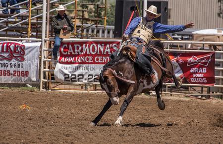 Saddle Bronc Rider, Cottonwood, California Rodeo
