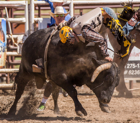 arena rodeo: Hanging on The Bull, Cottonwood, California Rodeo