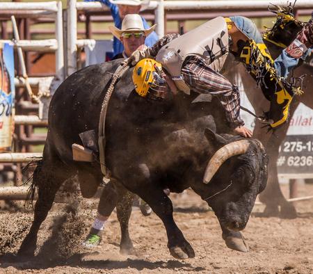 daring: Hanging on The Bull, Cottonwood, California Rodeo