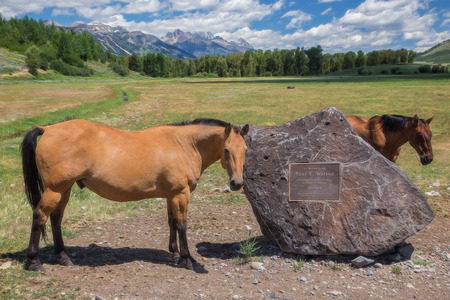 wyoming: Horses, Grand Tetons National Park, Wyoming