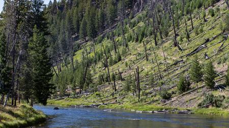 rushing water: Firehole River,Yellowstone National Park, Wyoming